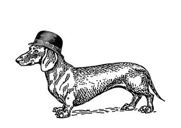 Dackel mit Hut