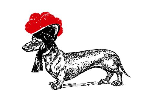 Dackel mit rotem Bollenhut