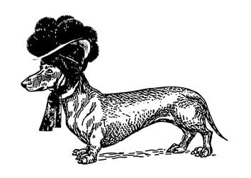 Dackel mit Bollenhut schwarz
